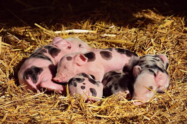 Es geht um 40 Millionen Fälle von Tierquälerei!